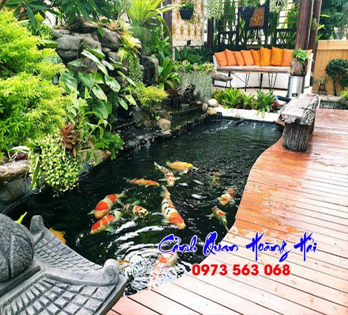 Hồ cá koi ở huyện Dương Minh Châu - Tây Ninh